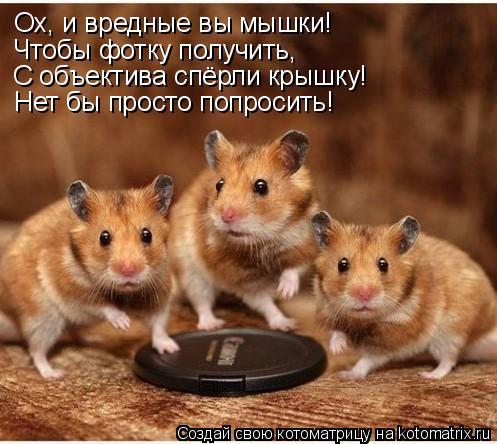 Котоматрица: Ох, и вредные вы мышки! Чтобы фотку получить, С объектива спёрли крышку! Нет бы просто попросить!