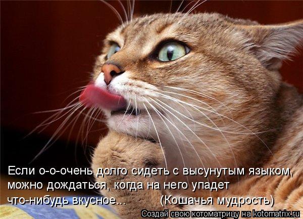 Котоматрица: Если о-о-очень долго сидеть с высунутым языком, можно дождаться, когда на него упадет  что-нибудь вкусное...          (Кошачья мудрость)