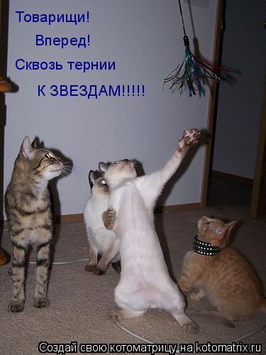 Котоматрица: Товарищи!  Вперед! Сквозь тернии К ЗВЕЗДАМ!!!!!