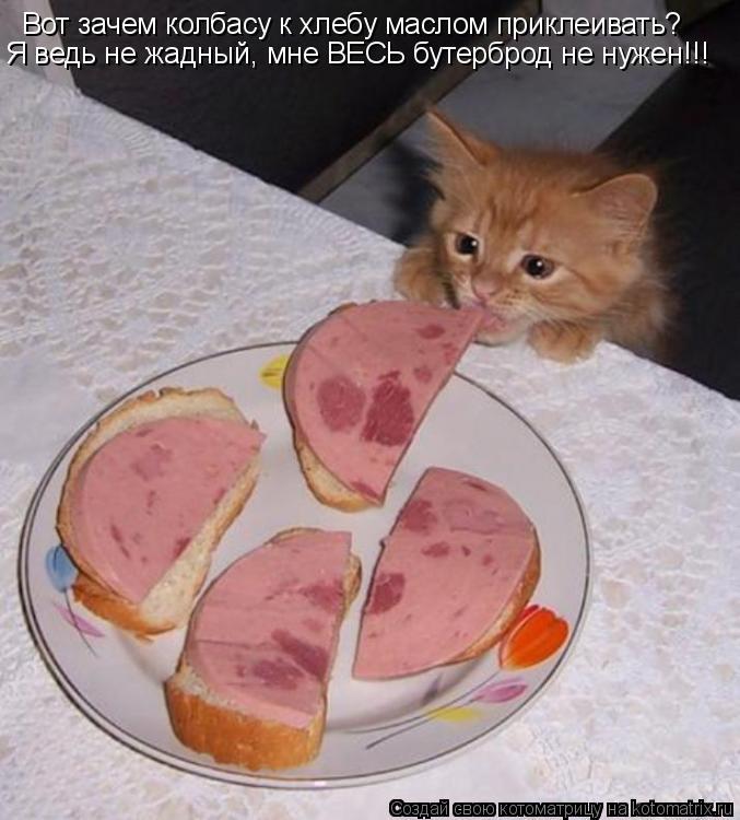 Котоматрица: Вот зачем колбасу к хлебу маслом приклеивать? Я ведь не жадный, мне ВЕСЬ бутерброд не нужен!!!