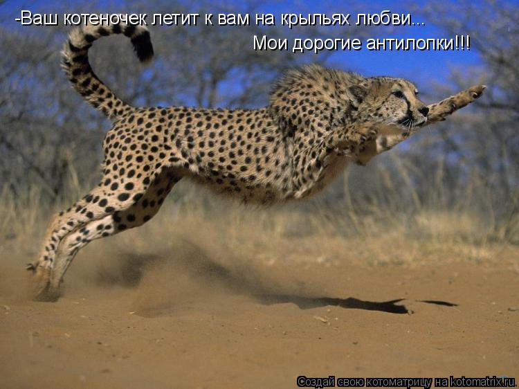 Котоматрица: -Ваш котеночек летит к вам на крыльях любви... Мои дорогие антилопки!!!