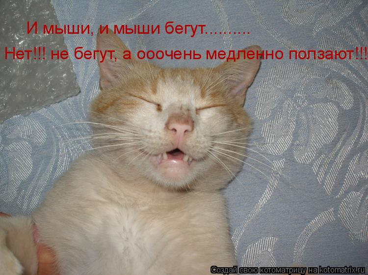 Котоматрица: И мыши, и мыши бегут.......... Нет!!! не бегут, а ооочень медленно ползают!!!