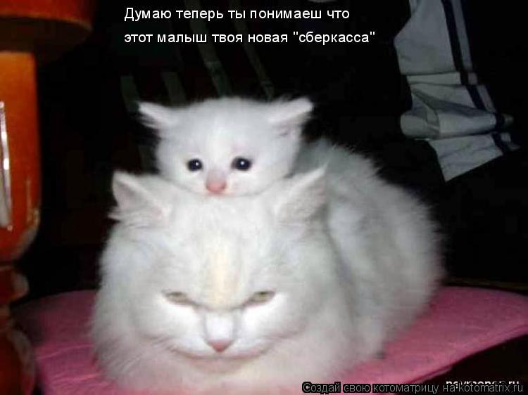 """Котоматрица: Думаю теперь ты понимаеш что  этот малыш твоя новая """"сберкасса"""""""