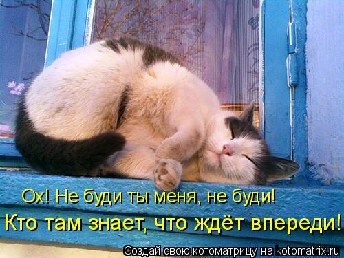 Котоматрица: Ох! Не буди ты меня, не буди! Кто там знает, что ждёт впереди!