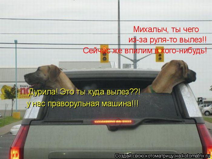 Котоматрица: Михалыч, ты чего  из-за руля-то вылез!! Сейчас же впилим в кого-нибудь! у нас праворульная машина!!! Дурила! Это ты куда вылез??!