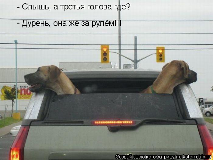 Котоматрица: - Слышь, а третья голова где? - Дурень, она же за рулём!!!