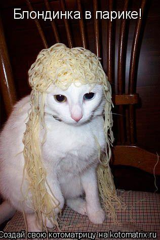 Котоматрица: Блондинка в парике!