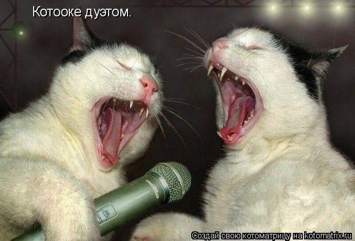 Котоматрица: Котооке дуэтом.