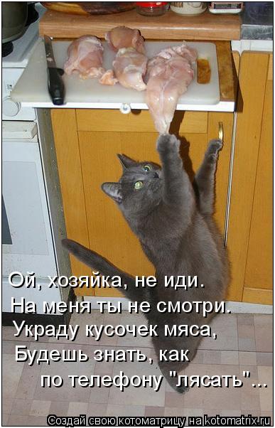 """Котоматрица: Ой, хозяйка, не иди. На меня ты не смотри. Украду кусочек мяса, Будешь знать, как по телефону """"лясать""""..."""