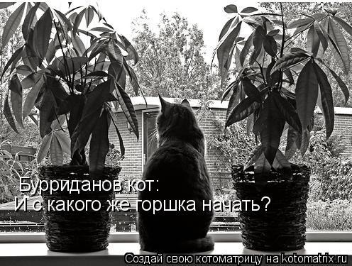 Котоматрица: Бурриданов кот: И с какого же горшка начать?