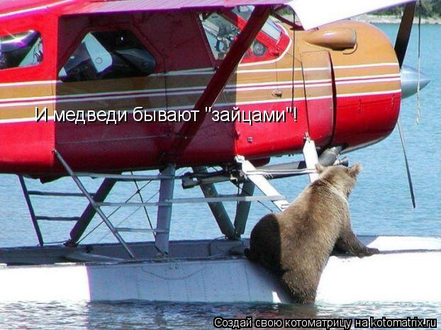 """Котоматрица: И медведи бывают """"зайцами""""!"""