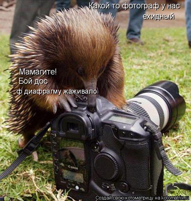 Котоматрица: Какой то фотограф у нас ехидный Мамагите! Бой дос ф диафрагму жаживало