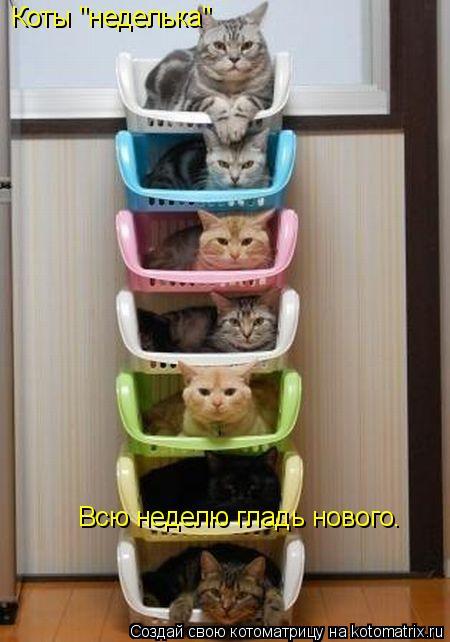 """Котоматрица: Коты """"неделька"""" Всю неделю гладь нового."""