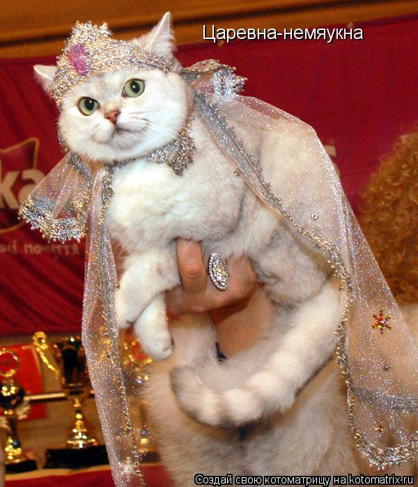 Костюм для кошки своими руками фото