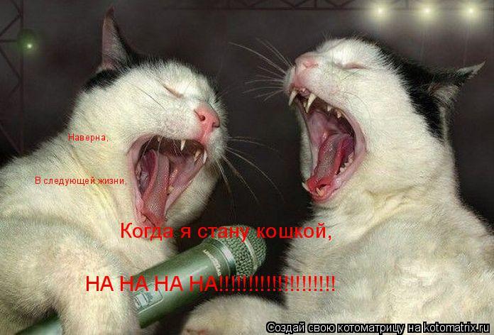 Котоматрица: Наверна, В следующей жизни, Когда я стану кошкой, НА НА НА НА!!!!!!!!!!!!!!!!!!!!