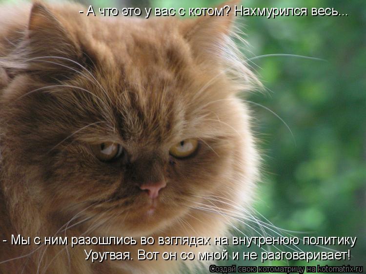 Котоматрица: - А что это у вас с котом? Нахмурился весь... - Мы с ним разошлись во взглядах на внутренюю политику Уругвая. Вот он со мной и не разговаривает!