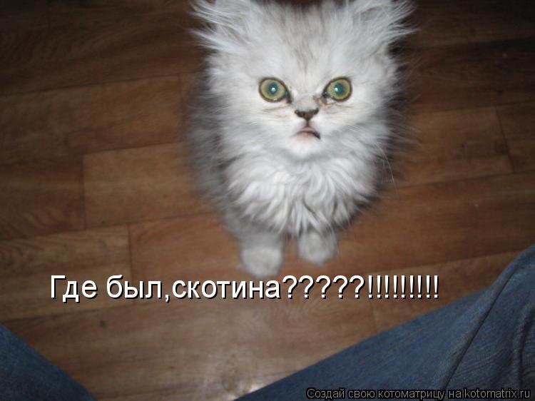 Котоматрица: Где был,скотина?????!!!!!!!!!