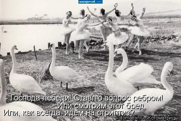 Котоматрица: - Господа лебеди! Ставлю вопрос ребром! Или смотрим этот бред,  Или, как всегда, идем на стриптиз?