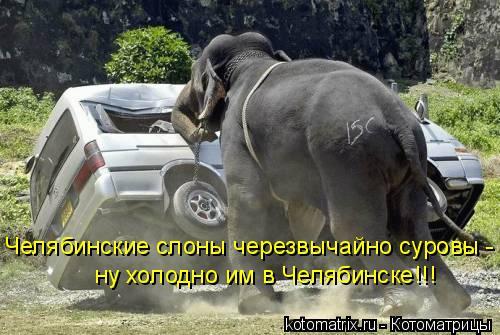 Котоматрица: Челябинские слоны черезвычайно суровы - ну холодно им в Челябинске!!!