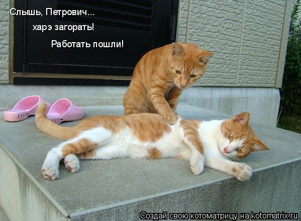 Котоматрица: Слышь, Петрович... Слышь, Петрович... харэ загорать! харэ загорать! Работать пошли!