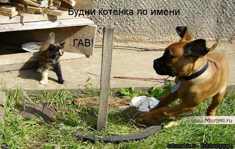 Котоматрица: Будни котенка по имени  ГАВ!