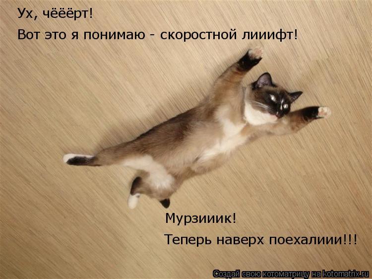 Котоматрица: Теперь наверх поехалиии!!! Мурзииик!  Вот это я понимаю - скоростной лииифт! Ух, чёёёрт!