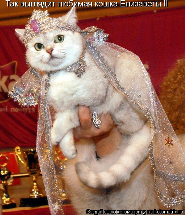Котоматрица: Так выглядит любимая кошка Елизаветы II