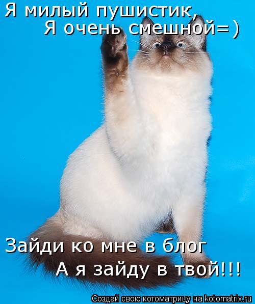 Котоматрица: Я милый пушистик, Я очень смешной=) Зайди ко мне в блог А я зайду в твой!!!