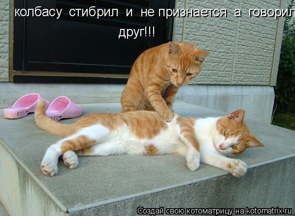 Котоматрица: колбасу  стибрил  и  не признается  а  говорил друг!!!