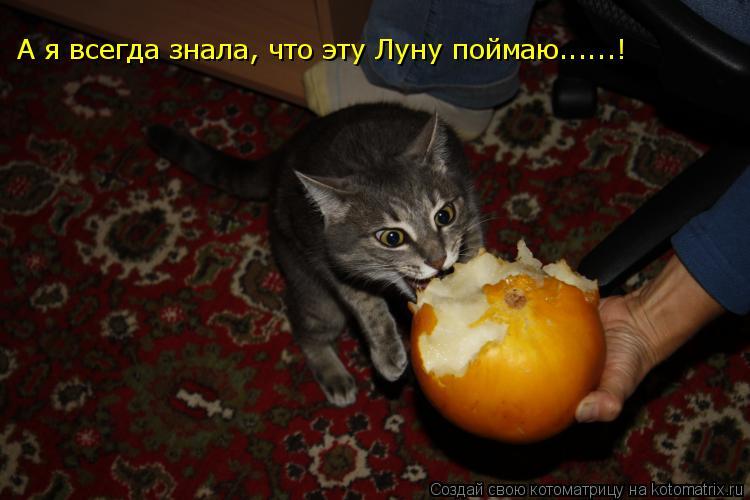 Котоматрица: А я всегда знала, что эту Луну поймаю......!