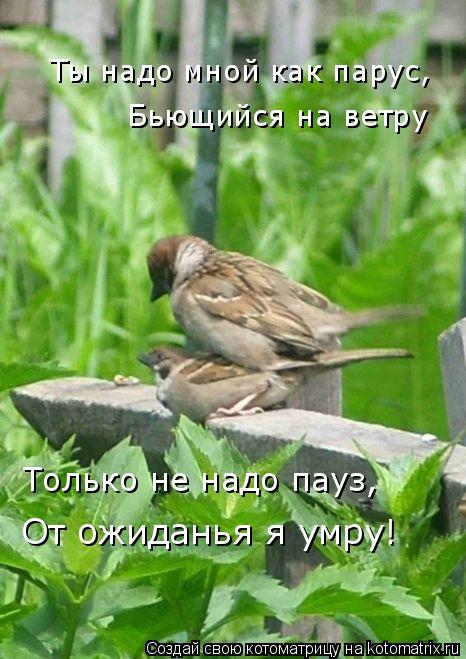 Котоматрица: Ты надо мной как парус, Бьющийся на ветру Только не надо пауз, От ожиданья я умру!