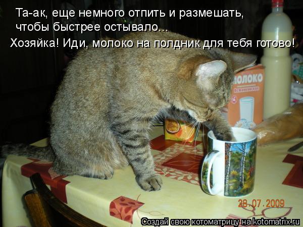 Котоматрица: Та-ак, еще немного отпить и размешать, чтобы быстрее остывало... Хозяйка! Иди, молоко на полдник для тебя готово!