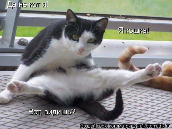 Котоматрица: Да не кот я! Я кошка! Вот, видишь?