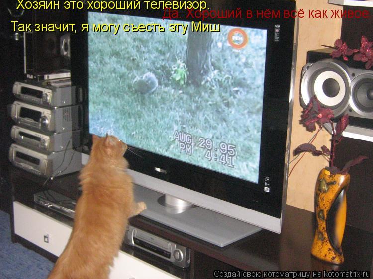 Котоматрица: Хозяин это хороший телевизор.           Да. Хороший в нём всё как живое.               Так значит, я могу съесть эту Миш