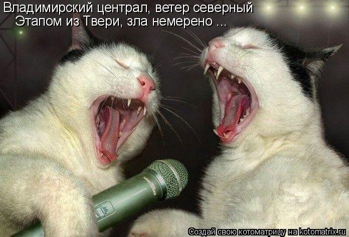 Котоматрица: Владимирский централ, ветер северный Этапом из Твери, зла немерено ...