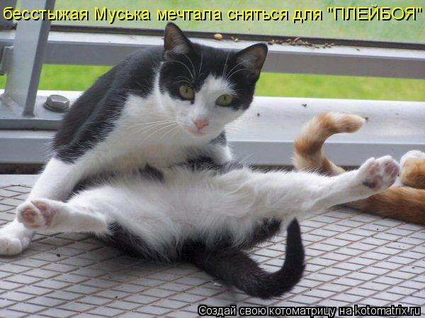 "Котоматрица: бесстыжая Муська мечтала сняться для ""ПЛЕЙБОЯ"""