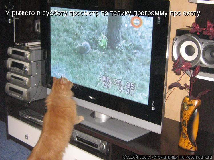 Котоматрица: У рыжего в субботу,просмотр по телику программу про охоту.