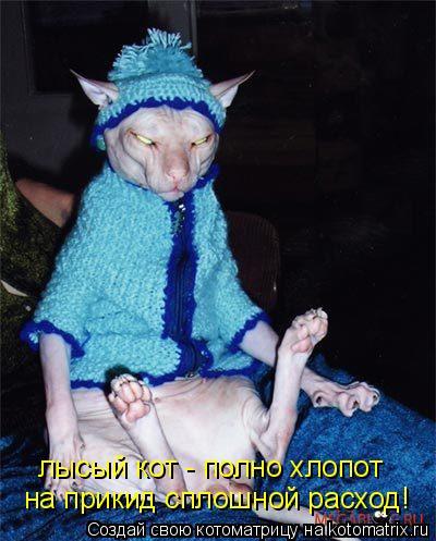Котоматрица: лысый кот - полно хлопот на прикид сплошной расход!