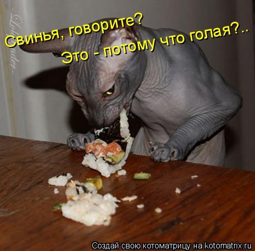 Котоматрица: Свинья, говорите?  Это - потому что голая?..