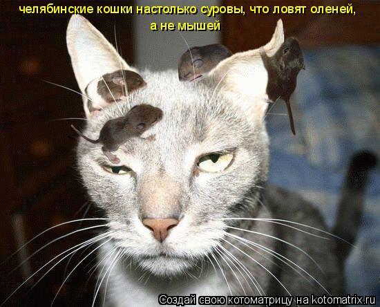 Котоматрица: челябинские кошки настолько суровы, что ловят оленей,  а не мышей