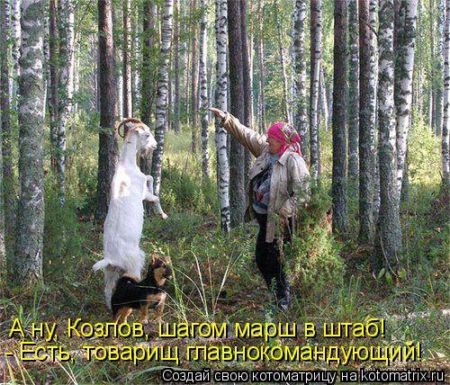 Котоматрица: А ну, Козлов, шагом марш в штаб! - Есть, товарищ главнокомандующий!