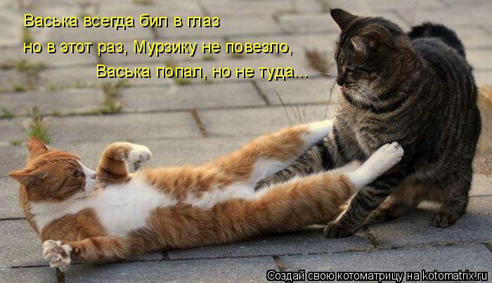 Котоматрица: Васька всегда бил в глаз но в этот раз, Мурзику не повезло, Васька попал, но не туда...