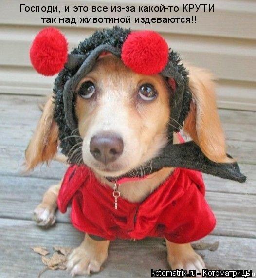 Котоматрица: Господи, и это все из-за какой-то КРУТИ так над животиной издеваются!!