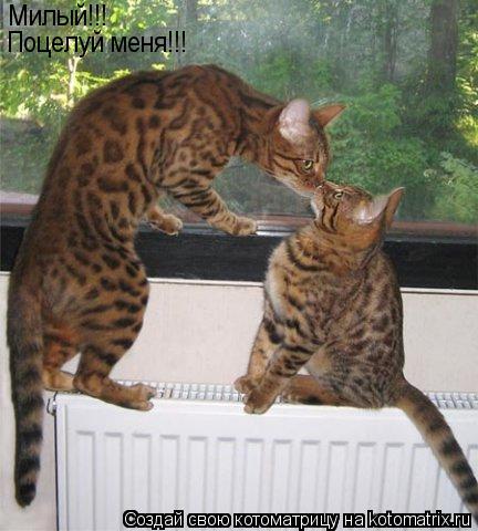 Котоматрица: Милый!!! Поцелуй меня!!!