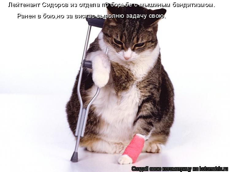 Котоматрица: Лейтенант Сидоров из отдела по борьбе с мышиным бандитизмом. Ранен в бою,но за вискас выполню задачу свою.