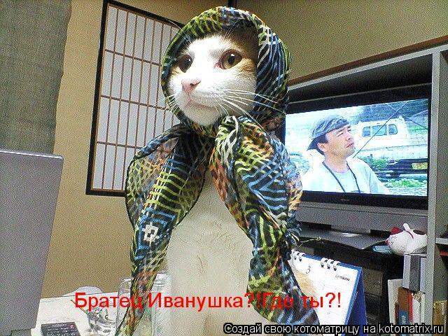 Котоматрица: Братец Иванушка?!Где ты?!