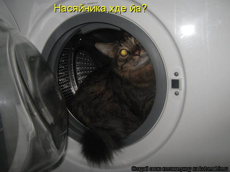 Котоматрица: Насяйника,хде йа?
