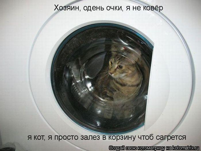 Котоматрица: Хозяин, одень очки, я не ковёр  я кот, я просто залез в корзину чтоб сагрется