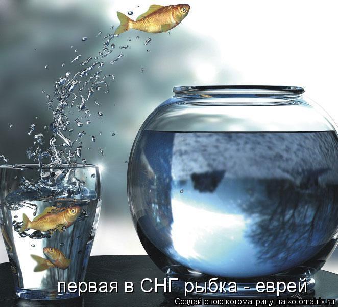 Котоматрица: первая в СНГ рыбка - еврей