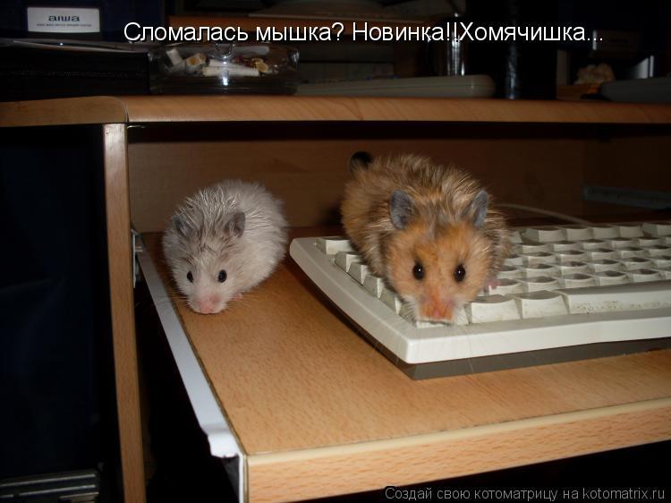 Котоматрица: Сломалась мышка? Новинка!!Хомячишка...